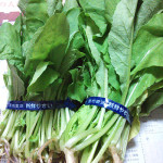 大根の抜き菜