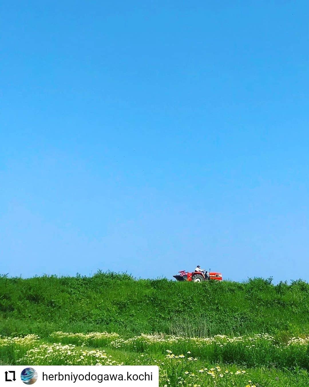 #Repost @herbniyodogawa.kochi…・・雨予報ですが、今週末も出店予定です5月14日 オーガニックマーケット池公園8時〜12時頃(予定)5月15日 日曜市追手筋沿いひろめ市場から高知城方面へ歩いて1分北側に出店8時〜12時頃(予定)よろしくお願いします!#赤いトラクター#トラクター#高知県産ハーブ#国産ハーブ#無農薬ハーブ#ハーブ#ハーブ仁淀川#高知県#ハーブ農家#ハーブ農園#ハーブ専門#ハーブのある暮らし#ハーブティー#ハーブティーのある暮らし#ブレンドハーブティー#ハーブブレンダー#料理用ハーブ#高知移住#ほどよい田舎暮らし#田舎暮らし#脱サラ農家#継業移住