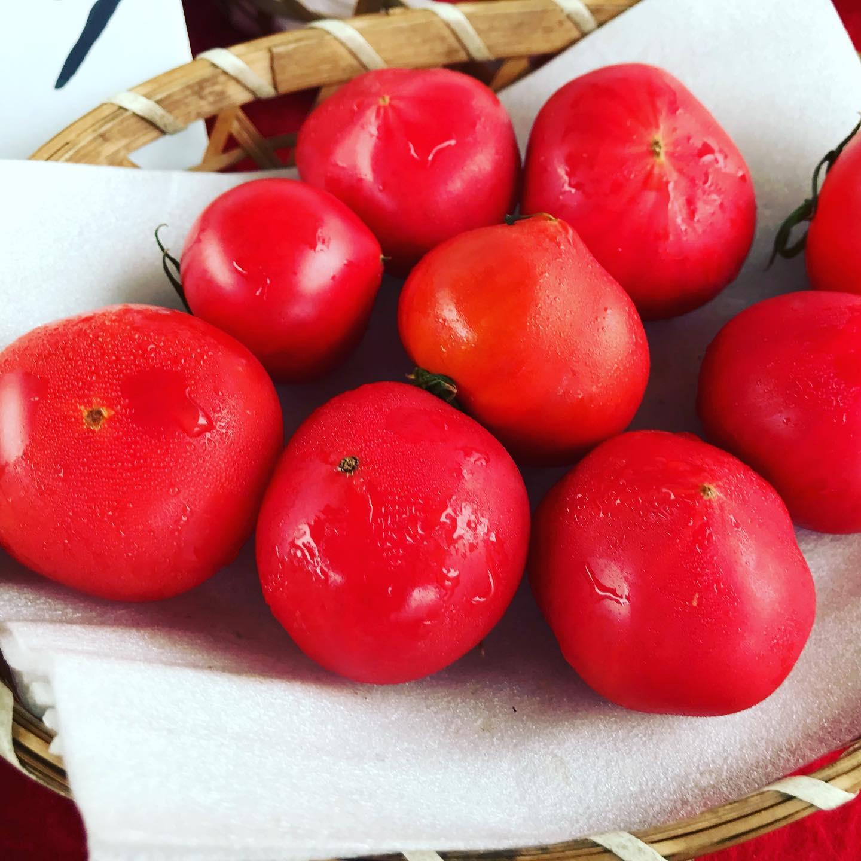 【武田くだもの店】正午を過ぎて、現在は、雨が上がっています。まだまだ、フルーツトマトが美味しいです。まる浜さん、まる有さん、徳谷トマト18番が勢揃いしています。#武田くだもの店#まる浜さん #まる有さん #徳谷トマト #武田くだもの店 #武田青果 #ウエルカムホテル高知から西へすぐ