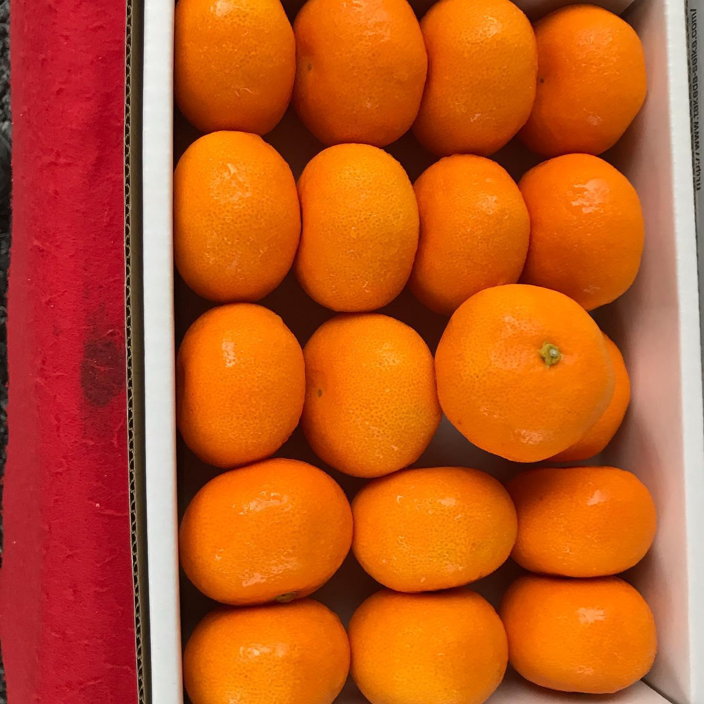 【日曜市三丁目南156番*武田くだもの店】日曜市出店しています。普段の年より、2〜3週間早く梅雨入りした模様です。山北のハウスみかんはじまりました。極早生種です。糖度が高く、14度あります。とても甘くて美味しいです。#日曜市くだもの #山北ハウスみかん #武田くだもの店 #武田青果#ウエルカムホテル高知から西へすぐ