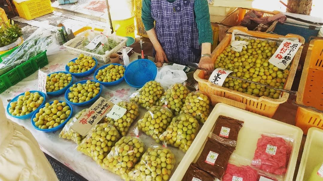 鏡村の梅、直売です。甲州小梅が今一番の漬け時だそうです。