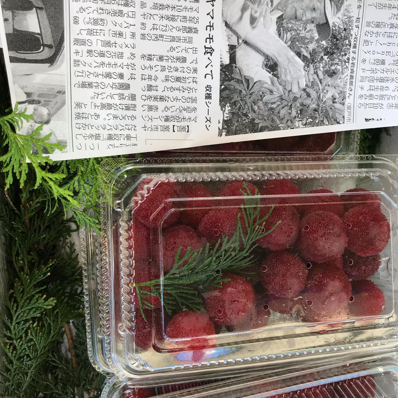 【日曜市三丁目南156番*武田くだもの店】日曜市で幻の果実やまももの販売をしています。室戸市吉良川町の岩貞義郎さん栽培の広東系やまももです。#日曜市くだもの #広東系やまもも#武田くだもの店 #武田青果#ウエルカムホテル高知西へすぐ