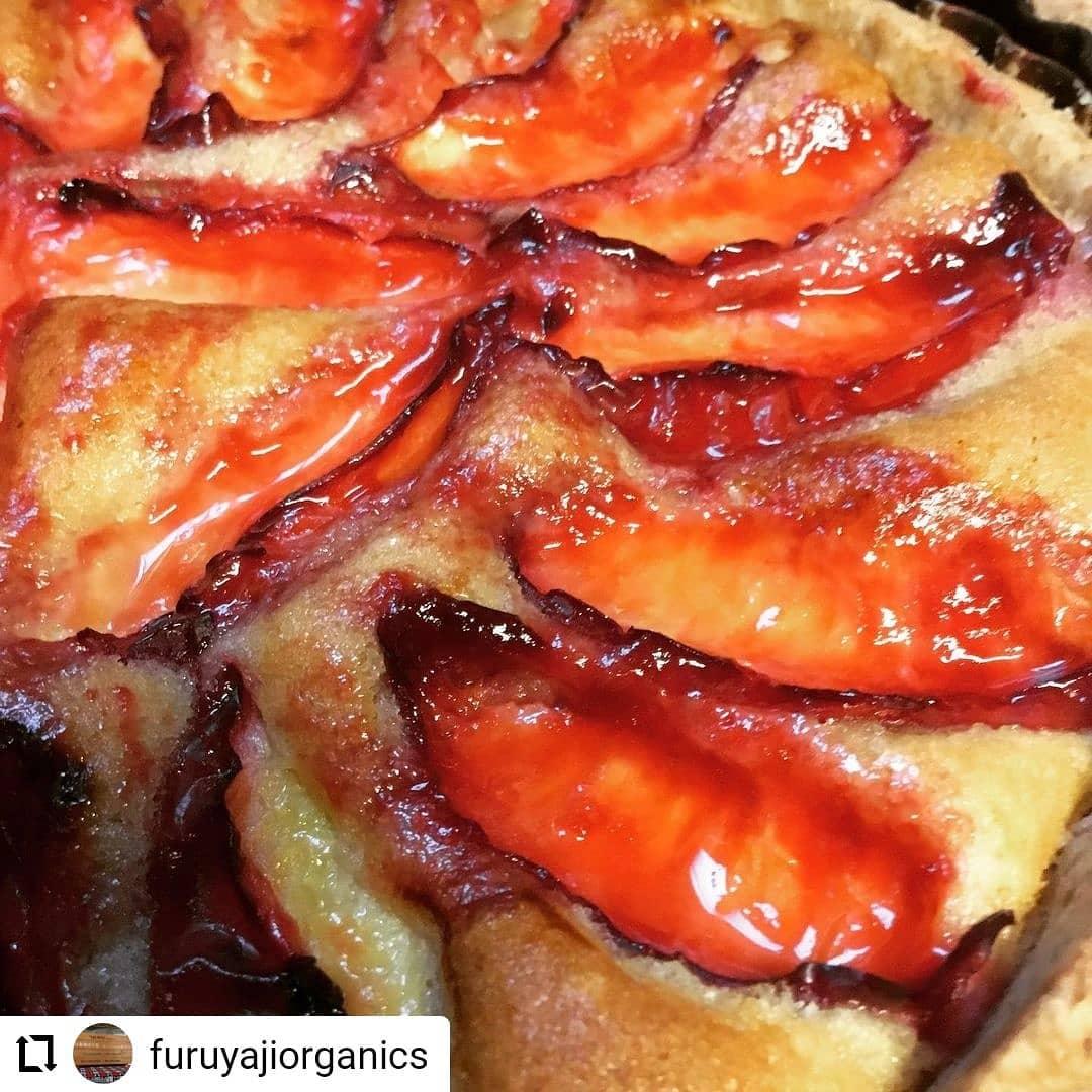#Repost @furuyajiorganics…おはようございます。本日日曜市に出店しています。今日のメニューはとうもろこしと玉ねぎのピザ玄米豆乳マフィン黒糖シナモンロールメロンパンキャロットケーキすももタルト梅ジャムポピーシードケーキドリンクもやってます🥤#フルヤジ #卵乳製品不使用