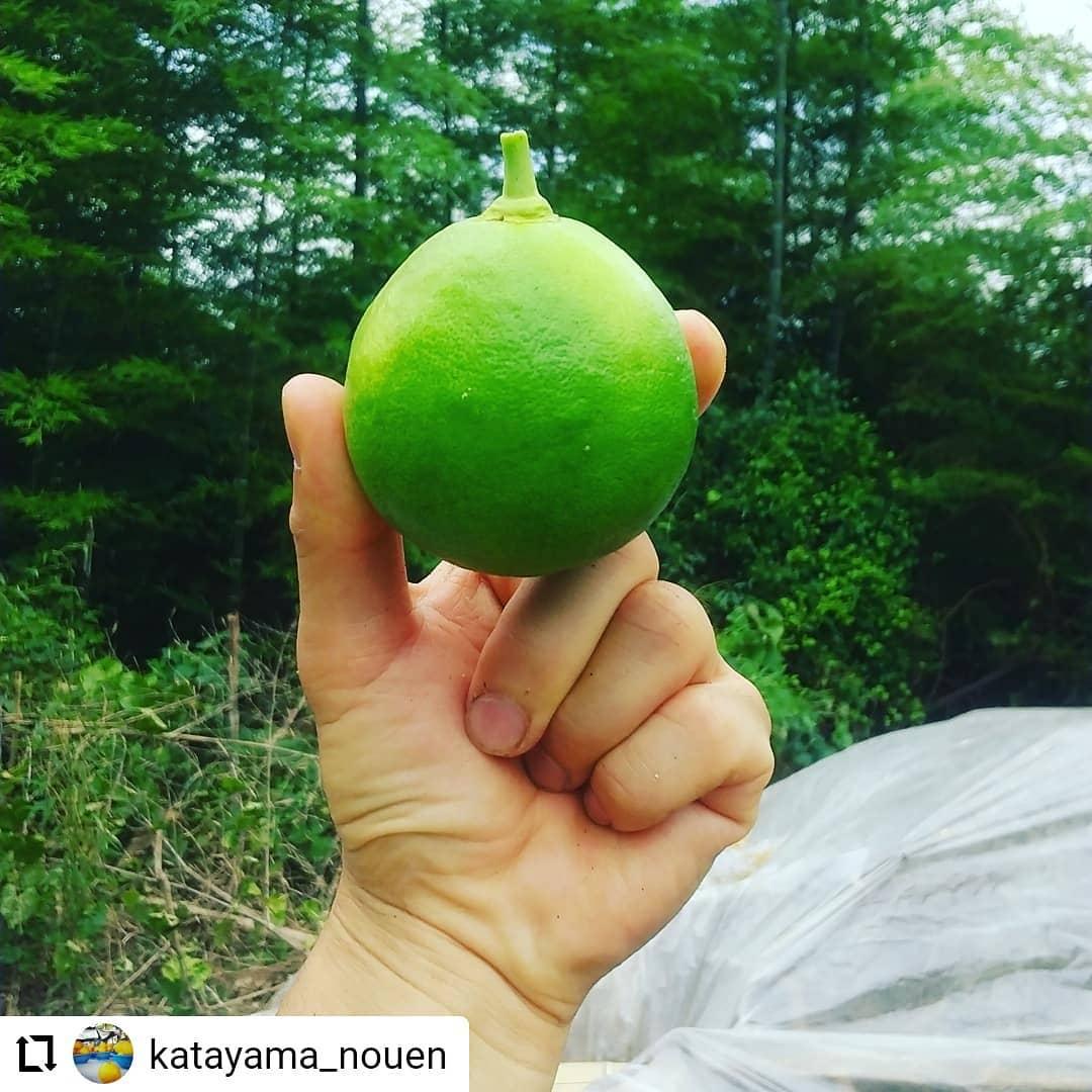 #Repost @katayama_nouen…【感謝】昨日はたくさんの方に足を運んで頂き、ありがとうございました!🥰おかげ様で1500本のスイートコーンの販売が終了しました。一昨年から2ヵ所目の耕作放棄地(竹やぶ)を天地返ししながら耕し、ようやくトウモロコシの栽培をすることができました。まだまだ少ない量しか栽培できておりませんが、たくさんのリピーターのお客様から美味しかったよ~という声でより一層頑張ろうと思えた今日この頃です。🏋️スイートコーンは終わりましたが、また再来週頃にはマニアイチオシのモチキビが販売できると思うので日曜市へぜひお越しくださーい#高知 #高知県 #若手農家 #感謝 #ありがとう #スイートコーン #日曜市