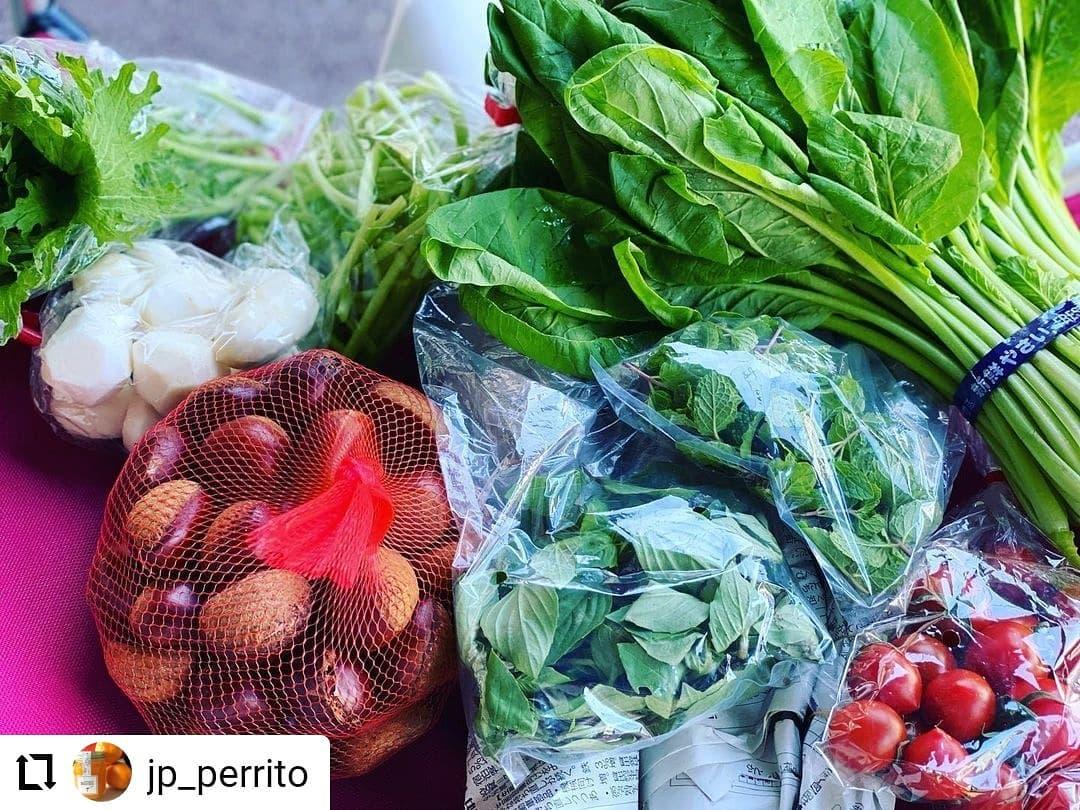 #Repost @jp_perrito…日曜市は採れたて野菜がい〜〜っぱい早起きは三文の徳葉物いっぱい買って来ました️日曜市に来てね♪#日曜市#葉物がいっぱい#栗もあるよ